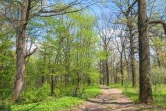 Ηλιόλουστο δάσος μονοπατιών την άνοιξη Στοκ εικόνες με δικαίωμα ελεύθερης χρήσης