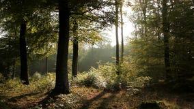 Ηλιόλουστο δάσος απόθεμα βίντεο