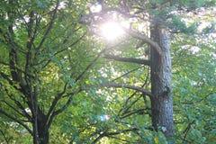 ηλιόλουστο δέντρο Στοκ εικόνα με δικαίωμα ελεύθερης χρήσης