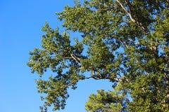 ηλιόλουστο δέντρο Στοκ Φωτογραφία