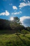 ηλιόλουστο δέντρο στοκ εικόνες