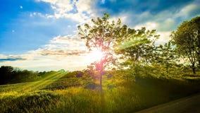 ηλιόλουστο δέντρο Στοκ φωτογραφία με δικαίωμα ελεύθερης χρήσης
