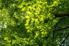 Ηλιόλουστο απόγευμα στο δάσος Στοκ Φωτογραφίες