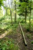 Ηλιόλουστο απόγευμα στο δάσος Στοκ Φωτογραφία
