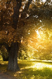Ηλιόλουστο δασικό τοπίο φθινοπώρου Στοκ Εικόνες