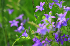 Ηλιόλουστο αφηρημένο πράσινο θολωμένο φύση υπόβαθρο με το άγριο λουλούδι, εκλεκτική εστίαση Στοκ Εικόνες