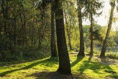 Ηλιόλουστο πράσινο δάσος Στοκ εικόνα με δικαίωμα ελεύθερης χρήσης