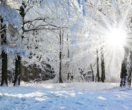 Ηλιόλουστο πρωί Χριστουγέννων Στοκ Εικόνες