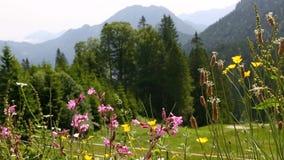 Ηλιόλουστο τοπίο βουνών στις βαυαρικές Άλπεις, Γερμανία απόθεμα βίντεο