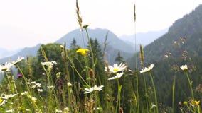 Ηλιόλουστο τοπίο βουνών στις βαυαρικές Άλπεις, Γερμανία φιλμ μικρού μήκους