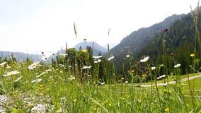 Ηλιόλουστο τοπίο βουνών στις βαυαρικές Άλπεις με τα όμορφα λουλούδια στο πρώτο πλάνο φιλμ μικρού μήκους