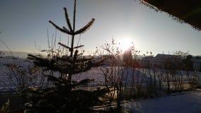 Ηλιόλουστο λυκόφως ημέρας με το χιόνι Στοκ Εικόνες