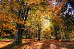 Ηλιόλουστο χρυσό πάρκο φθινοπώρου με τον πάγκο στη Σλοβενία Στοκ Φωτογραφίες