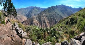 Η κάθοδος στο φαράγγι Colca κοντά σε Cabanaconde στο νότιο Περού Στοκ Εικόνα