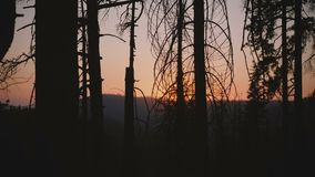 Η κάμερα που κινεί το σωστό παρουσιάζοντας όμορφο κόκκινο ήλιο που πηγαίνει κάτω στο ηλιοβασίλεμα μεταξύ του σκοτεινού δασικού δέ απόθεμα βίντεο