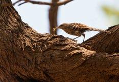 η κάμπια πουλιών Στοκ εικόνα με δικαίωμα ελεύθερης χρήσης