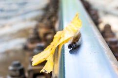 Η κάμπια σέρνεται κατά μήκος του σιδηροδρόμου Caterpillar, δρόμος, φθινόπωρο Στοκ Εικόνα