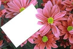 η κάρτα ανθίζει το ροζ δώρω& Στοκ φωτογραφίες με δικαίωμα ελεύθερης χρήσης