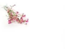 η κάρτα ανθοδεσμών ανασκόπησης ανθίζει λίγα ρόδινα Στοκ Εικόνες
