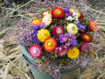 η κάρτα φθινοπώρου εύκολη επιμελείται τις διακοπές λουλουδιών τροποποιεί στο διάνυσμα Στοκ Φωτογραφία