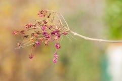 η κάρτα φθινοπώρου εύκολη επιμελείται τις διακοπές λουλουδιών τροποποιεί στο διάνυσμα Στοκ Εικόνες