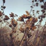 η κάρτα φθινοπώρου εύκολη επιμελείται τις διακοπές λουλουδιών τροποποιεί στο διάνυσμα Στοκ εικόνες με δικαίωμα ελεύθερης χρήσης