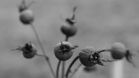η κάρτα φθινοπώρου εύκολη επιμελείται τις διακοπές λουλουδιών τροποποιεί στο διάνυσμα Στοκ εικόνα με δικαίωμα ελεύθερης χρήσης