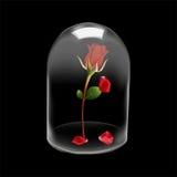 Η κάλυψη θόλων γυαλιού αυξήθηκε λουλούδι Στοκ Εικόνα