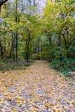 Η κίνηση του πάρκου τον Οκτώβριο στοκ εικόνες