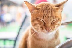 η κίτρινη γάτα Στοκ φωτογραφία με δικαίωμα ελεύθερης χρήσης