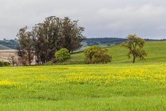 Η κίτρινη κοιλάδα ΙΙΙ Στοκ εικόνες με δικαίωμα ελεύθερης χρήσης