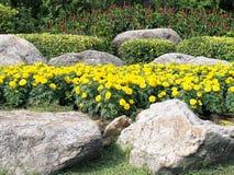 Η κίτρινη marigold άνθιση λουλουδιών, ο θάμνος, τα κόκκινα λουλούδια των ιατρικών εγκαταστάσεων και ο κήπος βράχου σταθμεύουν δημ Στοκ Εικόνες