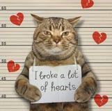 Η κακή γάτα έσπασε τις καρδιές στοκ εικόνα