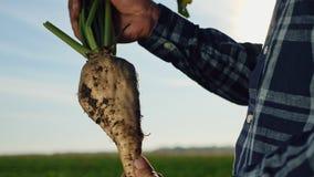 Η καλλιέργεια του σακχαρότευτλου φιλμ μικρού μήκους