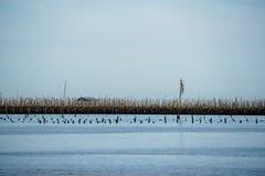 Η καλύβα ψαράδων, το μπαμπού και το ξύλινο ραβδί κτίζουν το αγρόκτημα στρειδιών επάνω από τον υγρότοπο θάλασσας με το σαφές υπόβα στοκ εικόνα
