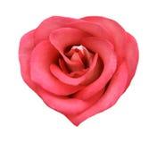 η καρδιά μορφής φυσική αυξή Στοκ εικόνα με δικαίωμα ελεύθερης χρήσης