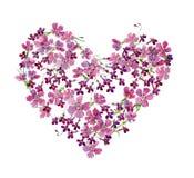 Η καρδιά του lobelia και των γαρίφαλων λουλουδιών τους ελεύθερη απεικόνιση δικαιώματος