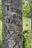 Η καρδιά αγάπης χάρασε στο δέντρο στην πάροδο Lover's, πράσινη θέση κληρονομιάς αετωμάτων, σπίτι του διάσημου συγγραφέα Lucy Ma Στοκ εικόνα με δικαίωμα ελεύθερης χρήσης