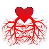 Η καρδιά και οι φλέβες Στοκ εικόνα με δικαίωμα ελεύθερης χρήσης