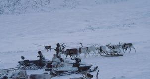 Η κατάπληξη συλλαμβάνοντας το βίντεο από την Αρκτική του στρατόπεδου yurts στη μέση tundra των παιδιών και των ενηλίκων περνά καλ απόθεμα βίντεο