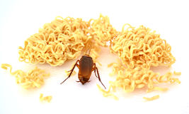 Η κατσαρίδα βρίσκει τα τρόφιμα Στοκ Εικόνες