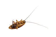 Η κατσαρίδα είναι νεκρή Στοκ φωτογραφία με δικαίωμα ελεύθερης χρήσης