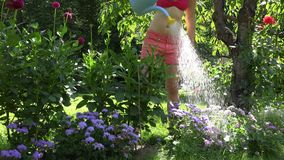 Η καυτή εργαζόμενη γυναίκα κήπων στα σορτς και το πότισμα στηθοδέσμων ανθίζει στον κήπο θερινού χρόνου 4K απόθεμα βίντεο