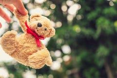 Η καφετιά αρκούδα διασώθηκε από την εγκατάλειψη στοκ εικόνα με δικαίωμα ελεύθερης χρήσης