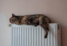 Η καφετιά γάτα βρίσκεται στην μπαταρία σε μια κρύα ημέρα Στοκ εικόνες με δικαίωμα ελεύθερης χρήσης