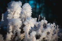 η καλυμμένη χλόη παγετού hoar βγάζει φύλλα τη μέντα Στοκ Φωτογραφίες