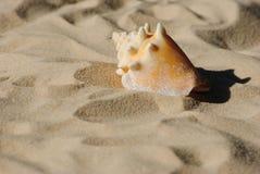 Η κερασφόρος Shell Στοκ Φωτογραφίες