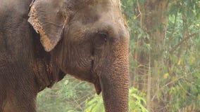 Η κινηματογράφηση σε πρώτο πλάνο, ένας ελέφαντας στο ζωολογικό κήπο ψεκάζεται με την άμμο απόθεμα βίντεο