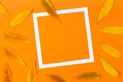 η κινηματογράφηση σε πρώτο πλάνο ανασκόπησης φθινοπώρου χρωματίζει το φύλλο κισσών πορτοκαλί Ζωηρόχρωμα φύλλα πτώσης φθινοπώρου κ Στοκ Εικόνες