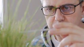 Η κινηματογράφηση σε πρώτο πλάνο ενός ατόμου στα ποτήρια στο εργαστήριο εξετάζει τους νεαρούς βλαστούς της ξήρανσης της κιτρινισμ απόθεμα βίντεο